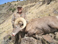 California Bighorn Sheep Green Scored 166 6/8