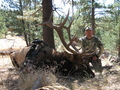 2010 Rocky Mt. 6x6 Oregon Archery Bull
